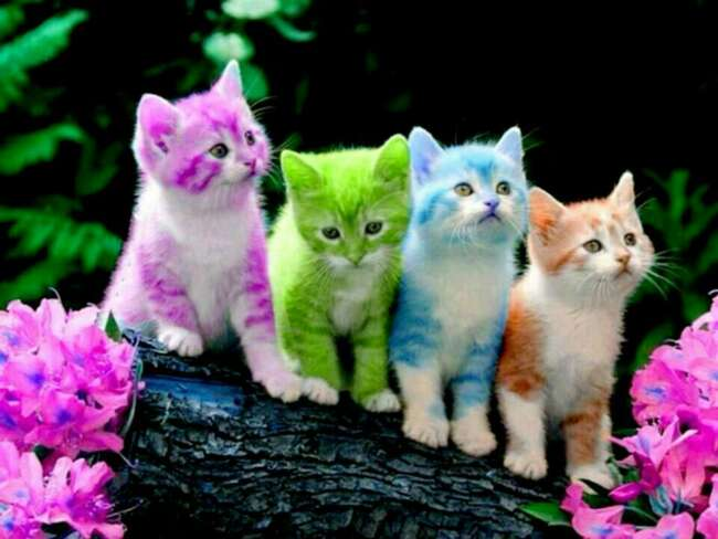 قصه کودکانه گربه های شلخته