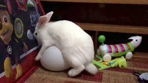 دنیای خرگوش ها قسمت چهارم - پذیرش و آمیزش در خرگوش ها