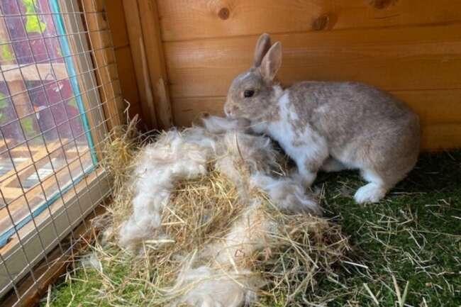 دنیای خرگوش ها قسمت چهارم
