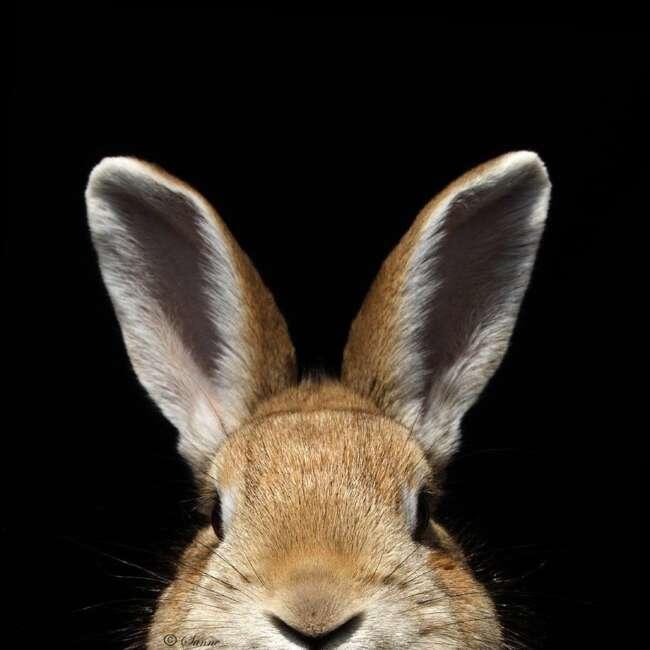 62 ear