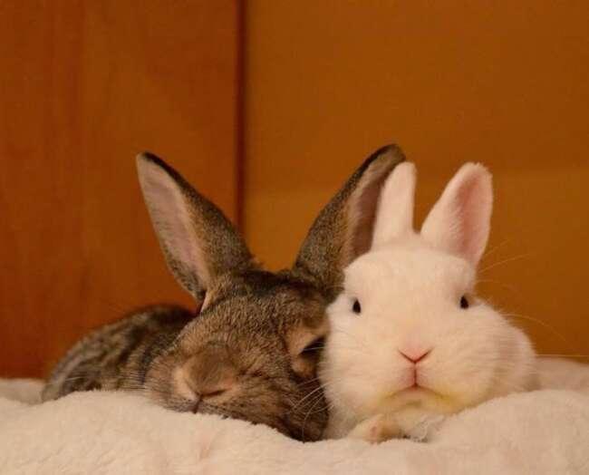 پذیرش و آمیزش در خرگوش ها - دنیای خرگوش ها قسمت چهارم - زایش خرگوش - بلوغ جنسی خرگوش ها