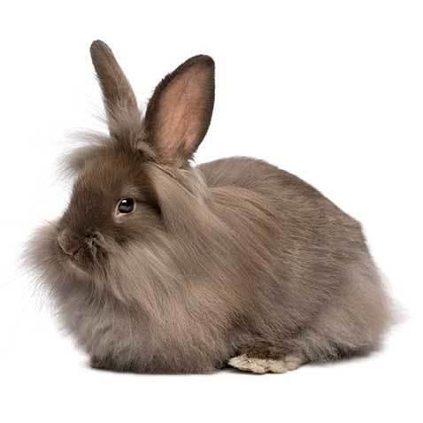 کوتولهی هوتوت - دنیای خرگوش ها قسمت هشتم - نژادهای خرگوش