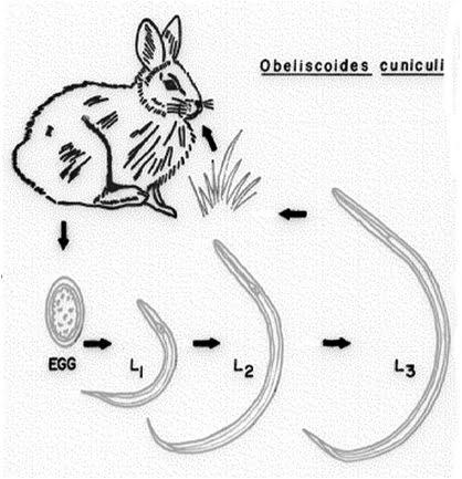 دنیای خرگوش ها قسمت هفتم - بیماری های خرگوش