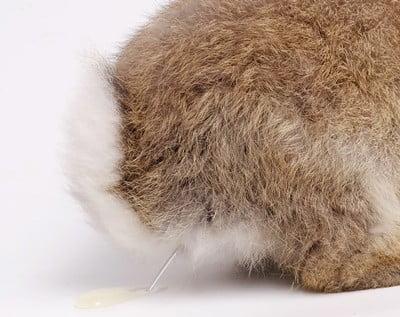 و مدفوع خرگوش