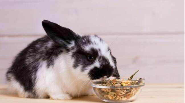 دنیای خرگوش ها قسمت سیزدهم - مراقبت و نگهداری خرگوش - نگهداری و مراقبت خرگوش