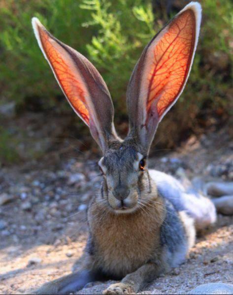 10 ear