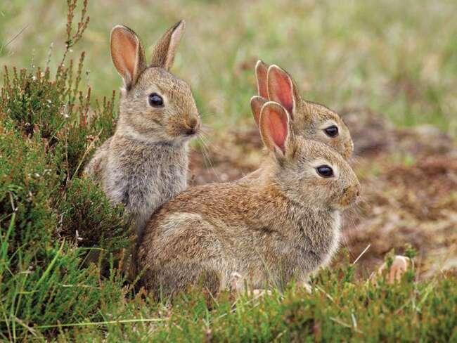59 rabbit2