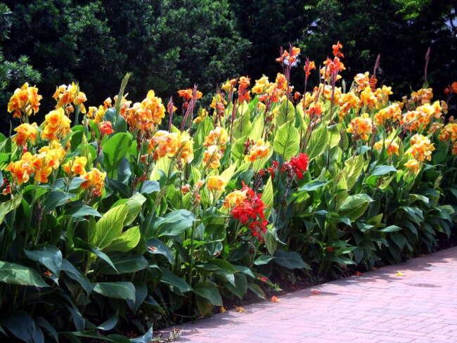 گلهای باغچه ای چند ساله