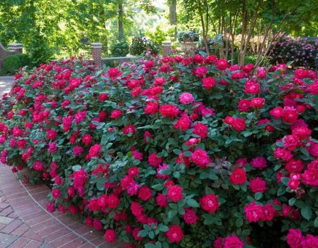 گلهای باغچه ای