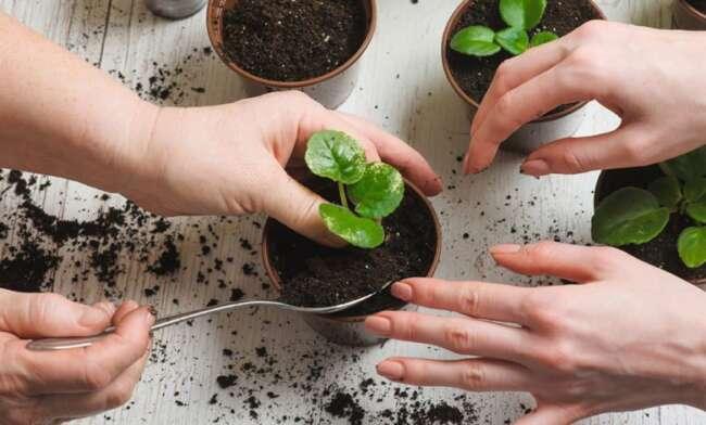 انواع کود گیاهان آپارتمانی