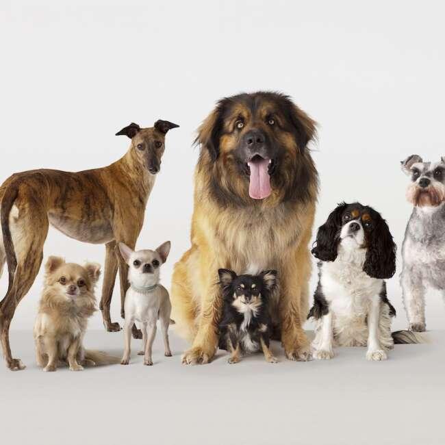 دنیا در نگاه سگ ها