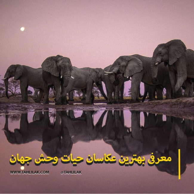 بهترین عکاسان حیات وحش جهان/عکاسان حیات وحش
