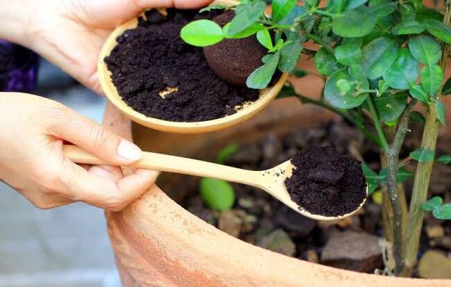 کود تقویتی گیاهان آپارتمانی / کود تقویتی گلهای آپارتمانی