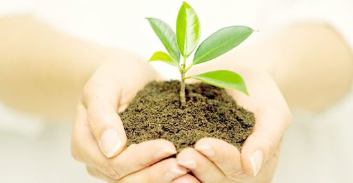 مزایای کود تقویتی گیاهان آپارتمانی - آموزش اصول کوددهی