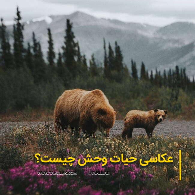 عکاسی حیات وحش/ عکس حیات وحش