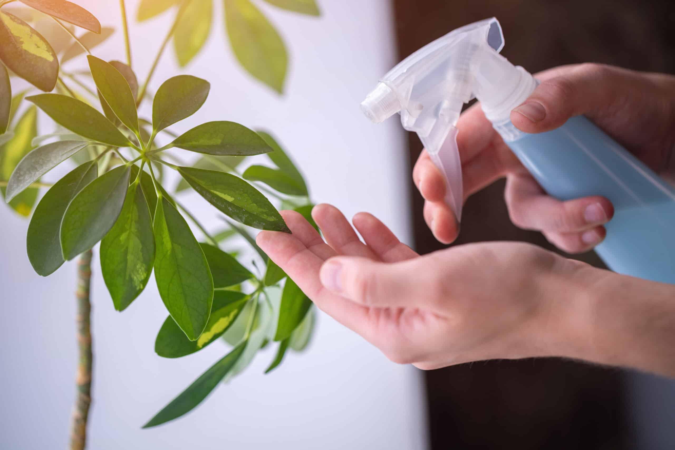 روش ساخت جزیره برای گیاهان