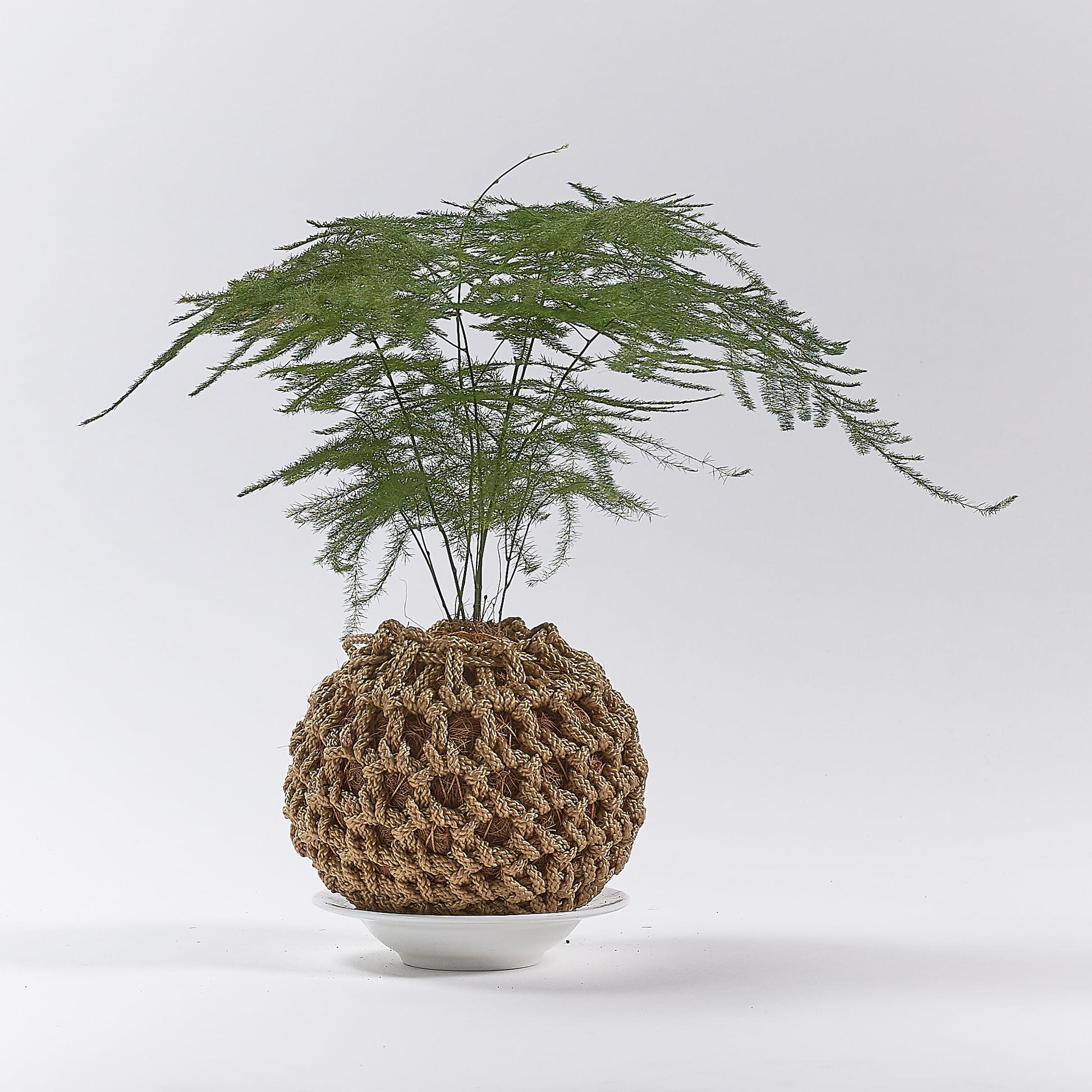 گیاهان مناسب برای کوکداما