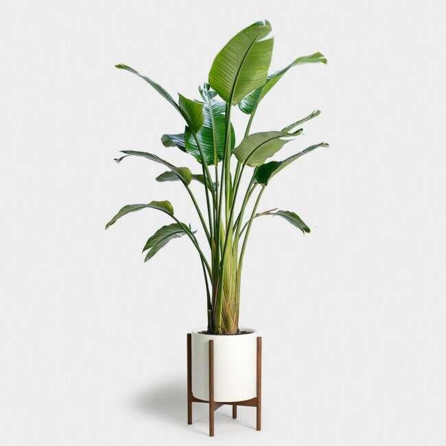 گیاهان دکوراسیون