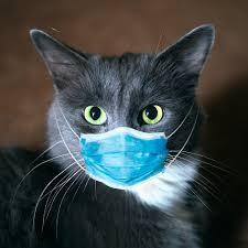 واکسن کرونا برای حیوانات