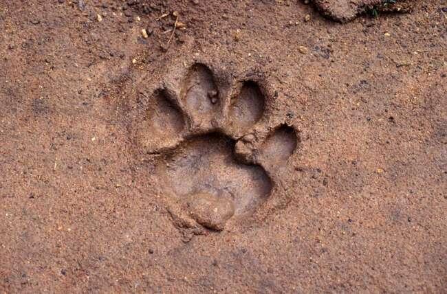 24 footprint tig1