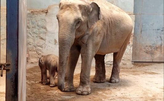 تولد اولین فیل در ایران