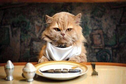 امتحان را گربه نخورده