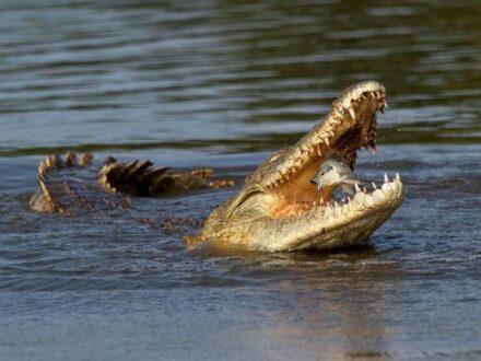 برندگان مسابقه عکاسی طبیعت و حیات وحش