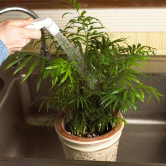 کردن برگ گیاهان 2 1