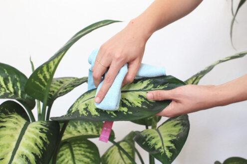 کردن برگ گیاهان 7