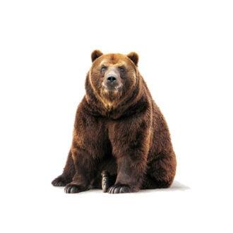 خرس در کوه بوعلی سیناست