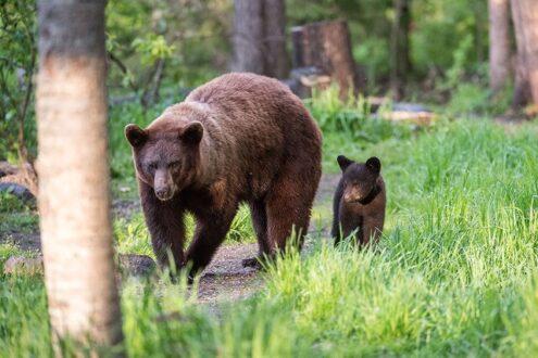 آموزش نحوه مواجه شدن با خرس در طالقان