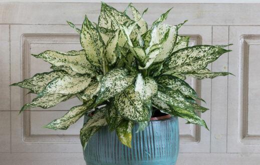 گیاه مناسب سرویس بهداشتی