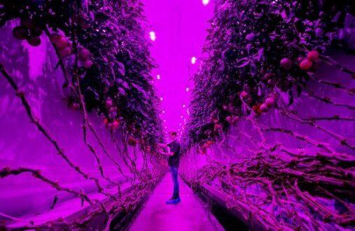 بهترین تصاویر علمی سال 2020 درخشش کشاورژی گلخانهای با تکنولوژی بالا در هلند