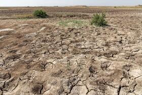 تنها تالاب البرز در مرز خشک شدن