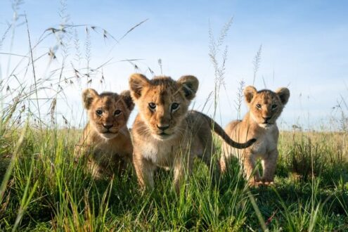 فروش عکس برای حمایت از حیات وحش