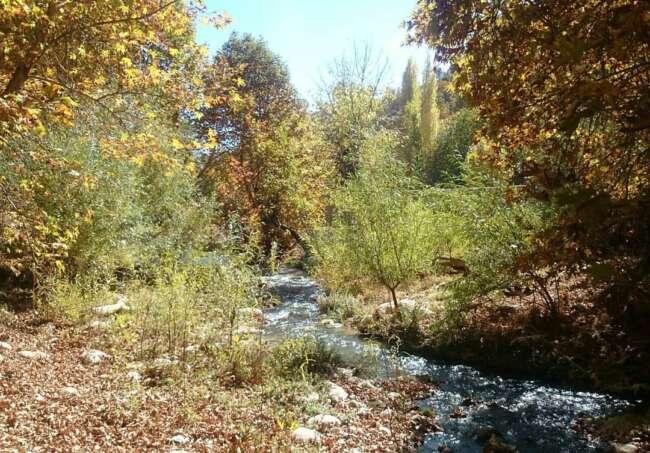 پارک جنگلی پروز