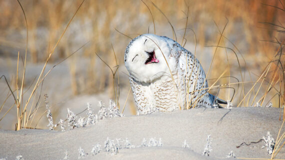 عکس خنده حیوانات
