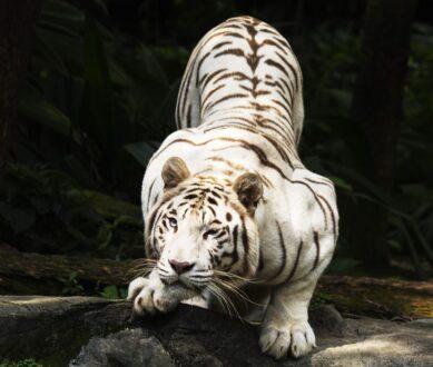 12 عکس از حیوانات زیبا