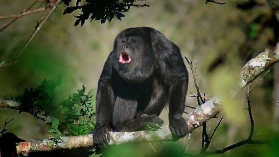 2 3 monkey3