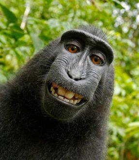 میمون زوزه کش