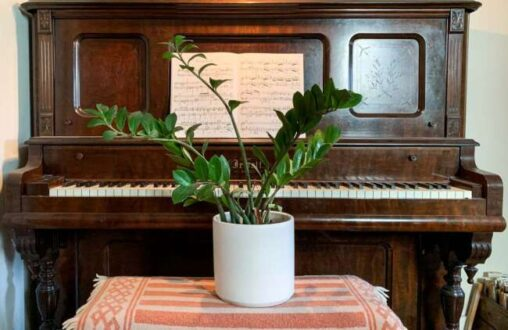 تاثیر موسیقی بر گیاهان