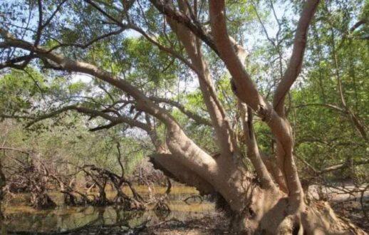 جنگل حرا چابهار