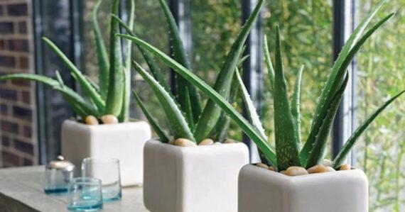 گیاهان مناسب آشپزخانه