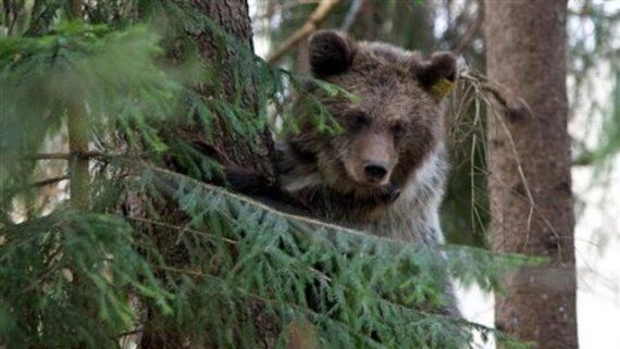 تاوان بی توجهی به حق طبیعت؛ نزدیک شدن حیوانات وحشی به زیستگاه های انسانی