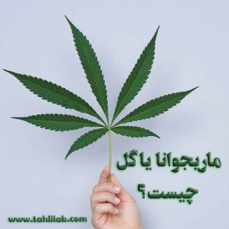 ماریجوانا یا گل چیست؟
