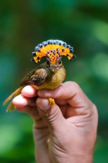پرنده زیبا