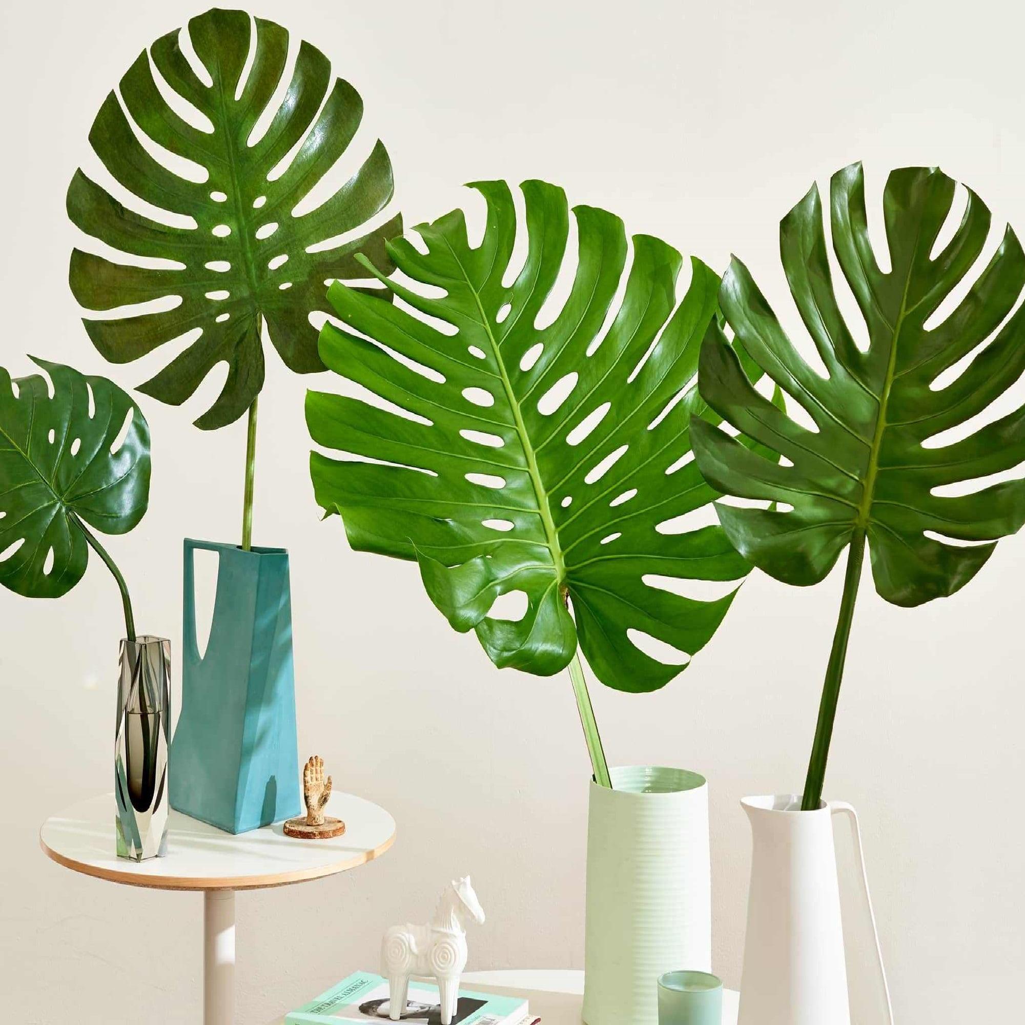 گیاهان مناسب دکوراسیون