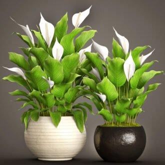 اسپاتی فیلوم (گیاه صلح)