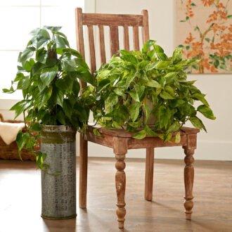 گیاهان آپارتمانی مقاوم به نور کم